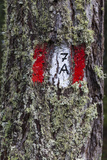 Travellingmarking on a Tree, Hiking at the Bottom of the Sas Dla Crusc, South Tyrol Photographic Print by Gerhard Wild