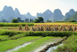 China, Rice Fields at the Yulong River, Landscape, Karst Mountains Photographic Print by Catharina Lux