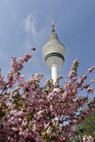 Cherry Blossoms and Television Tower, Hamburg, Germany, Europe Photographic Print by Axel Schmies