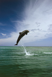 Sea, Ordinary Dolphin, Delphinus Delphis, Jump, Series Photographic Print by Frank Lukasseck