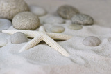 Still Life with Starfish Photographic Print by Andrea Haase
