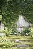 Garden, Wooden Door, Overgrown Photographic Print by  Fact