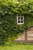 Farmhouse, Facade, Ivy Covered, Detail Photographic Print by Nora Frei