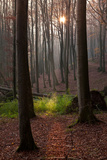 The Baltic Sea, National Park Jasmund, Autumn Forest Photographic Print by Catharina Lux