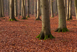 The Baltic Sea, National Park Jasmund, Steep Coast, Beech Forest Photographic Print by Catharina Lux