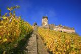 Ruin FŸrstenberg Castle Above the Town Rheindiebach in the Midst of Autumn-Coloured Vineyards Photographic Print by Uwe Steffens