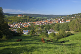 Germany, Hessen, Northern Hessen, Spangenberg, Townscape, Meadow, Cattle, Bison Herd, Grazing Photographic Print by Chris Seba