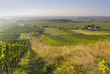 Vineyards Between Baden Bei Wien and Gumpoldskirchen, Vienna Basin, Lower Austria, Austria Photographic Print by Rainer Mirau