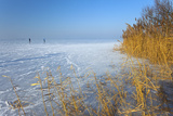 Europe, Germany, Steinhude, Steinhuder Meer, Ice Cover, Reed, Winter Photographic Print by Chris Seba