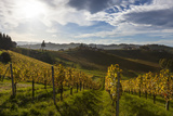 Europe, Austria, Styria, South-Styrian Wine Route, Vineyards Photographic Print by Gerhard Wild