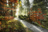 Woodland, Way, Light, Back Light, Sun, Fog, Mountains, Alps, Autumn, Beeches Photographic Print by Stefan Hefele