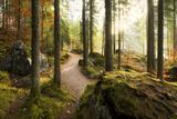 Woodland, Light, Back Light, Magic, Moss, Way, Stones, Autumn, Ground Photographic Print by Stefan Hefele