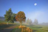 Country Lane Through the Meadows of the Eastern Rhšn Near Breitungen, Fog, Decreasing Moon Photographic Print by Uwe Steffens