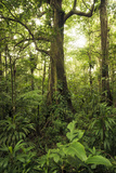 Guadeloupe, France, the Caribbean, Rainforest, Jungle, Tree, Leaves, Vegetation, Lush, Green Photographic Print by Stefan Hefele