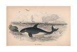 Grampus Giclee Print by Robert Hamilton