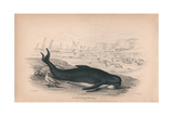 The Deductor or Caing Whale Giclee Print by Robert Hamilton