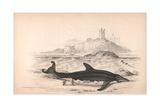 Delphinorynchus of Breda Giclee Print by Robert Hamilton