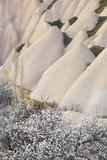 Tuff Stone Erosion with Uchisar, Blossoming Trees, Cappadocia, Anatolia, Turkey Photographic Print by Rainer Mirau