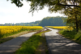 The Baltic Sea, RŸgen, Path Through Rape Field, Summer Photographic Print by Catharina Lux