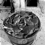 Crabs in a Basket Photographic Print by John Frye