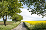 Vielbrunn, Hesse, Germany, Country Road Between Cherry Trees and Rape Fields Photographic Print by Bernd Wittelsbach