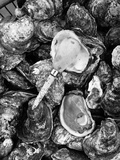 Shucked Oysters Photographic Print by A. Aubrey Bodine