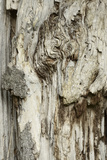 Deadwood, Detail, Fissures and Structures, Stubnitz, National Park Jasmund Photographic Print by Andreas Vitting