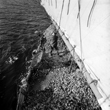 Shovelling Oysters Photographic Print by A. Aubrey Bodine