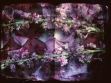 A Floral Montage on an Open Book Photographic Print by Alaya Gadeh