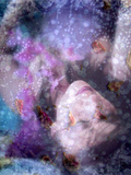 A Montage of a Portrait of a Woman, Flowers and Texture Photographic Print by Alaya Gadeh