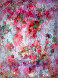 Dreamy Photographic Layer Work of Red Roses Photographic Print by Alaya Gadeh