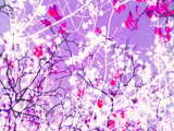 Photomontage of Trees in Purple Tones Photographic Print by Alaya Gadeh
