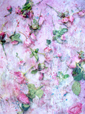 A Poetic Floral Montage from Pink Roses on Painted Texture Photographic Print by Alaya Gadeh