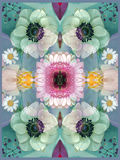 Composing, Symmetrical Arrangement of Flowers in Pastel Shades Photographic Print by Alaya Gadeh