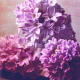 Photomontage of Hyacinths Blossoms and Textures in Pink, Lilacs and Brown Tones Photographic Print by Alaya Gadeh