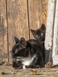 Young Cat with Mother Photographic Print by Andrea Haase