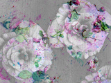A Poetic Floral Montage from Pink Roses and Begonia Blossoms on Painted Wooden Background Photographic Print by Alaya Gadeh