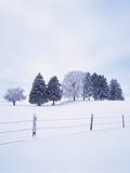 Germany, Bavaria, AllgŠu, Snow Scenery, Trees Photographic Print by Herbert Kehrer