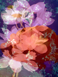 Floral Montage, Photographic Layer Work Photographic Print by Alaya Gadeh