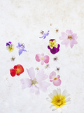 Blossoms, Bright, Different, Still Life Photographic Print by Axel Killian