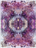 Symmetric Floral Montage from Flowers Photographic Print by Alaya Gadeh