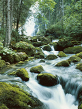 Forest, Torrent, Stones, Moss Photographic Print by  Thonig