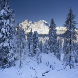 Italy, South Tyrol, Alto Adige, Monte Cristallo, Snow, Spruces Photographic Print by Rainer Mirau