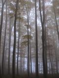 Austria, Lower Austria, Peilstein (Mountain), Autumn Forest, Fog Photographic Print by Gerhard Wild