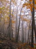 Austria, Lower Austria, Peilstein (Mountain), Autumn Forest, Fog, Footpath Photographic Print by Gerhard Wild