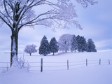 Germany, Bavaria, AllgŠu, Snow Scenery, Trees Photographic Print by Herbert Kehrer