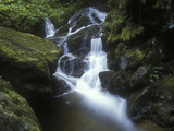 Germany, Baden-WŸrttemberg, Black Forest, Wutach Gorge, Lotenbach Ravine, Waterfall with Moss Photographic Print by Andreas Keil