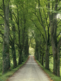 Avenue Photographic Print by  Thonig