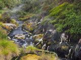 Hot Springs, Waimangu Volcanic Valley, Rotorua, Bay of Plenty, North Island, New Zealand Photographic Print by Rainer Mirau