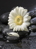 White Blossom on Black Stones Photographic Print by Uwe Merkel